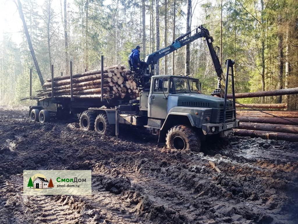Заготовка бревна и погрузка леса на манипулятор на делянке в Велиже